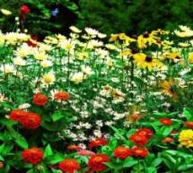 Garduino-Automated Gardening System using Arduino