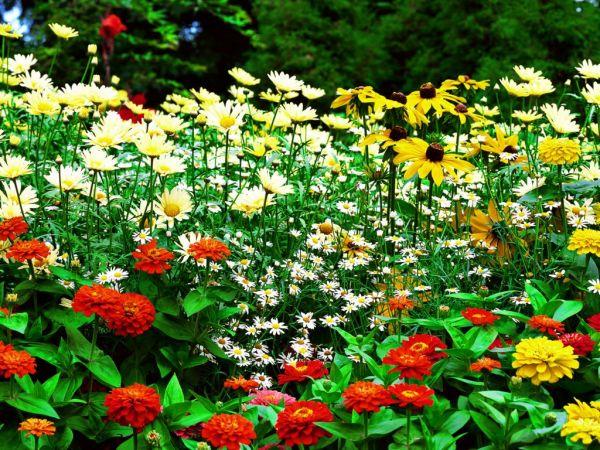 Arduino Automated Gardening System