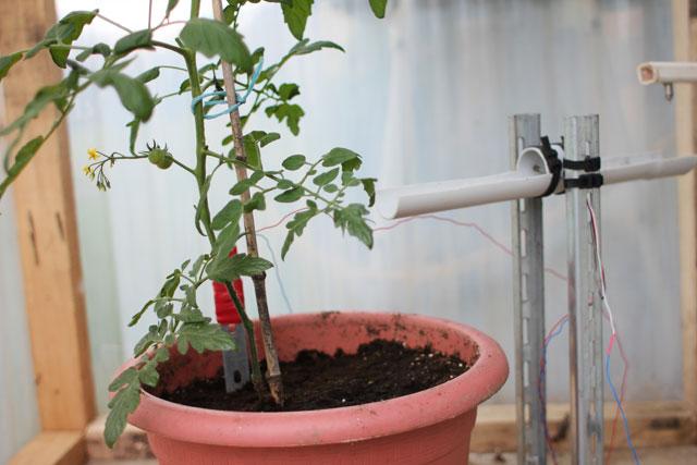 JarroseLaPlante Social Botanical Project