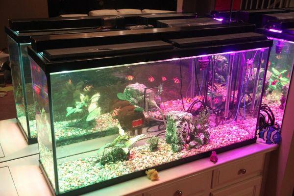 Aquarium Light V1