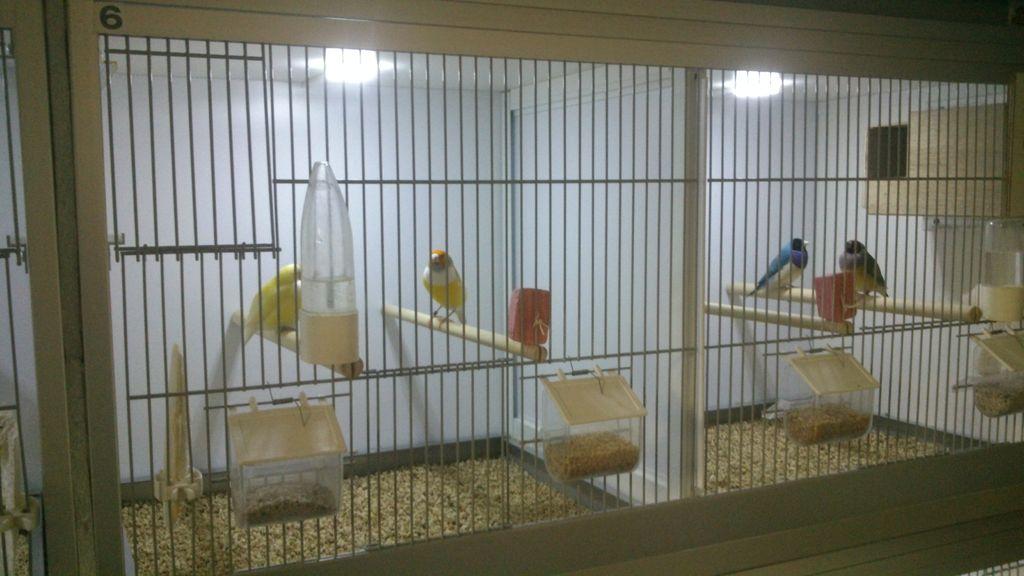 Bird cage LED daylight simulation system