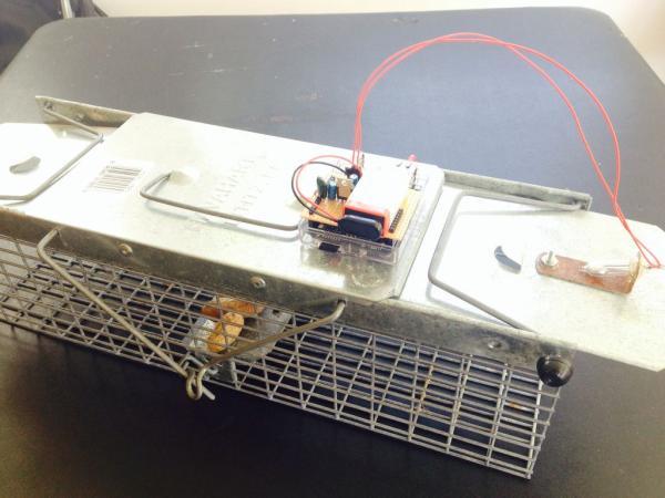 Critter Twitter Trap using Arduino