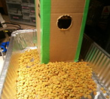 Vacation Pet Feeder from Recycled Materials