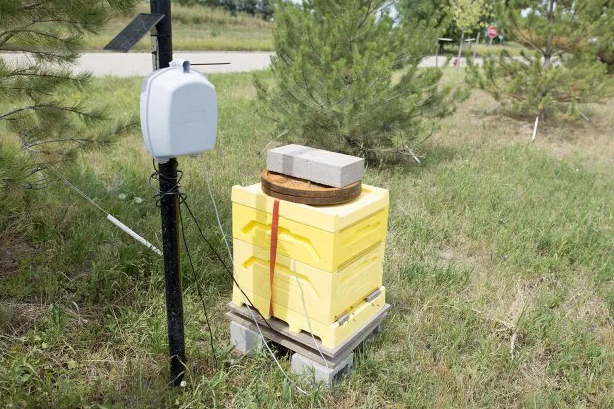 The Internet of Bees Adding Sensors to Monitor Hive Health