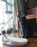 Super Stylish Automatic Cat Feeder