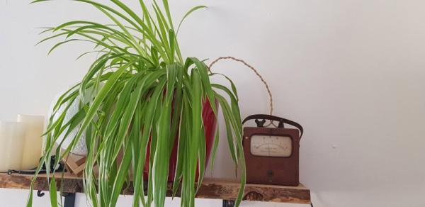 VINTAGE AMMETER BECOMES PLANT MOISTURE GAUGE